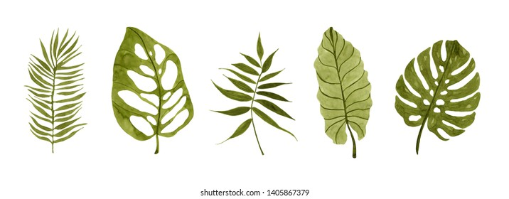 Realistic tropical botanical foliage plants. Set of tropical leaves: green palm neanta, monstera. Hand painted watercolor illustration isolated on white. - Illustration