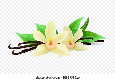 Realistic vanilla flowers and sticks isolated on background