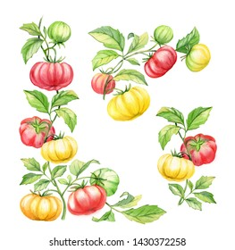 Realistic watercolor botanical illustration big tomatoes brandywine cherries border corner design elements hand painted juicy ripe fresh food decorative red and yellow elements set isolated on white