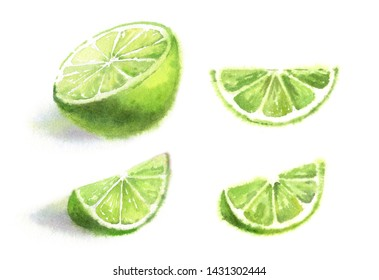 Realistic watercolor green lime fruits floral painting of juicy half whole and three fresh slices boat hand painted ripe food commercial tropical food label elements set isolated on white background