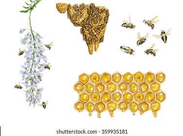 realistic watercolor hand made illustrations of honey bee (apis mellifera) with bees collect pollen from a flower and carrying pollen back to the hive, bees flying and cells of honey isolated on white