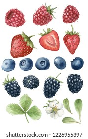 Realistic watercolor illustration of blackberries, strawberries, blueberries, raspberries and green leafs. Hand-drawn illustration.
