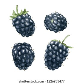 Realistic watercolor illustration of different blackberries. Hand-drawn illustration.