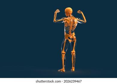Rear view of human skeleton. 3D illustration
