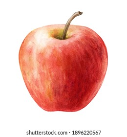 Red apple fruit watercolor illustration. Realistic sweet juicy organic food element. Delicious single fruit isolated on white background. Fresh red whole apple tasty nutrition close up image.