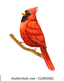 Red Bird Cardinal. Winter Christmas Hand Painted Greeting Card Illustration. On white background. Watercolor illustration