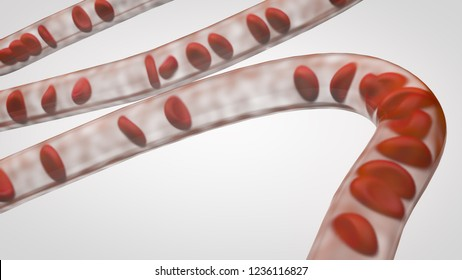 Red blood cells flowing through a capillary in the vascular system, 3d medical illustration