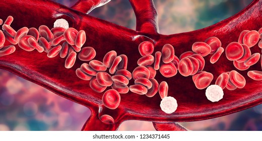 Red blood cells and leukocytes, cross-section of a blood vessel, 3D illustration