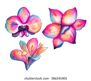 Red, blue, yellow watercolor flowers illustration, isolated on white background hand drawn orchid and lily collection