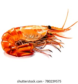 Red boiled prawn, cooked tiger shrimp, seafood ingredient, isolated, watercolor illustration on white