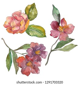 Red camelia. Floral botanical flower. Wild spring leaf isolated. Watercolor background illustration set. Watercolour drawing fashion aquarelle isolated. Isolated camelia illustration element.