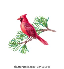 red cardinal bird, Christmas holiday design, clip art, watercolor illustration isolated on white background