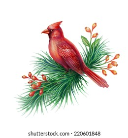 red cardinal bird with pine branch and berries, watercolor illustration isolated on white background