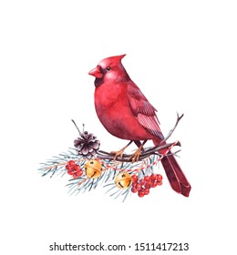 Red cardinal bird sitting on a twig of pine tree with berries and bells. Isolated watercolor christmas illustration.