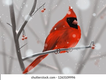 Red Cardinal sitting on a branch