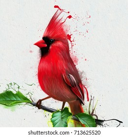 Red cardinal, Virginia cardinal, or (lat. Cardinalis cardinalis) is a species of bird from the family of cardinalfish (Cardinalidae). Watercolor illustration of birds, closeup on white background.