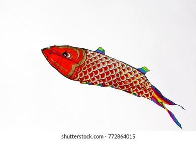 Red Carp fish Illustration