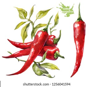 Red chilli pepper. Hand drawing watercolor on white background. Can be used for decoration of cards, stickers, encyclopedias, menus and ingredients of dishes, as well for seed packaging.