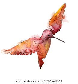 Red colibri in a wildlife. Wild freedom, bird with a flying wings. Watercolor background illustration set. Watercolour drawing fashion aquarelle. Isolated hummingbird illustration element.