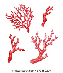 red coral branch, watercolor illustration, isolated on white background
