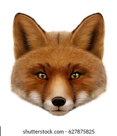 Red fox portrait . isolated  illustration on white background