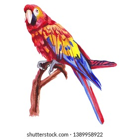 Red green macaw, ara parrot, on branch isolated, watercolor illustration