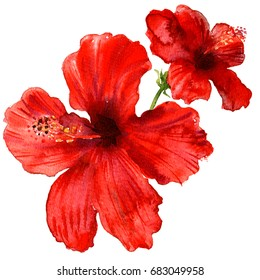 Red hibiscus flower, tropical plants isolated, watercolor illustration on white