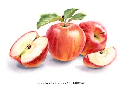 Red juicy apples composition realistic watercolor fruits painting hand painted two whole elements with half boat green leaves floral fresh tasty food arrangement isolated on white background commercia