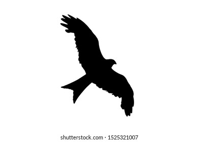 Red Kite rapture black silhouette cut out and isolated on a white background