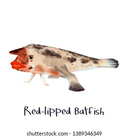 Red Lipped Batfish animal illustration