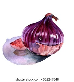 Red onion. Watercolor sketch on a white background.