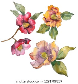 Red and orange camelia. Floral botanical flower. Wild spring leaf isolated. Watercolor background illustration set. Watercolour drawing fashion aquarelle. Isolated camelia illustration element.