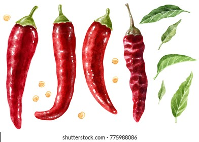 Red pepper watercolor illustration, isolated on white