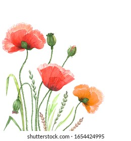red poppies flowers watercolor illustration on a white background, with green buds and leaves
