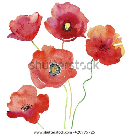 Red poppy flowers watercolor painting water stock illustration red poppy flowers watercolor painting water color flowers on white paper a summer mightylinksfo