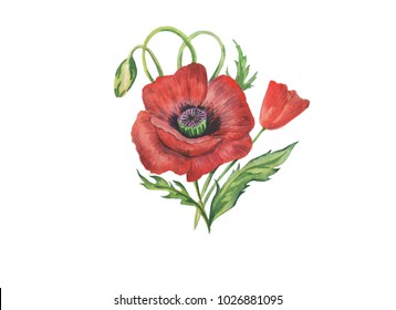 Red poppy is a herbaceous plant.