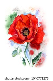 Red poppy, watercolor drawing in an expressive manner.