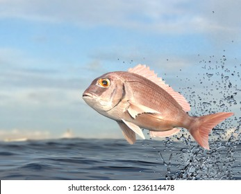 Red porgy fish with pink color jumping high above water 3d render