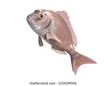 Red progy seabream fish jumping upwards isolated 3d render
