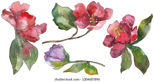 Red and purple camelia floral botanical flower. Wild spring leaf wildflower. Watercolor background illustration set. Watercolour drawing fashion aquarelle. Isolated camelia illustration element.