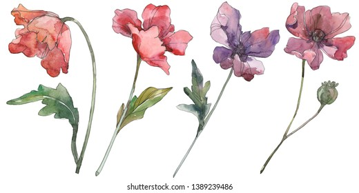 Red and purple poppy floral botanical flowers. Wild spring leaf wildflower isolated. Watercolor background set. Watercolour drawing fashion aquarelle. Isolated poppies illustration element.
