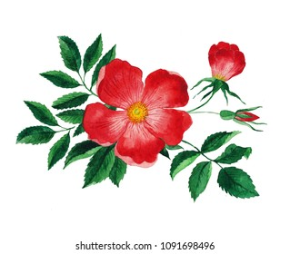 Red rose hip. Watercolor flower with leaves