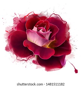 Red rose and spray paint in front of the background. Greeting for text and background