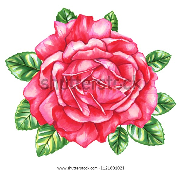Red roses with leaves on isolated white background. Watercolor and marker art. Botanical Illustration. Perfect for element for design, print, greeting card, wedding.