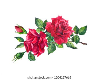 Red roses. Watercolor drawing