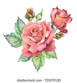 red roses.watercolor