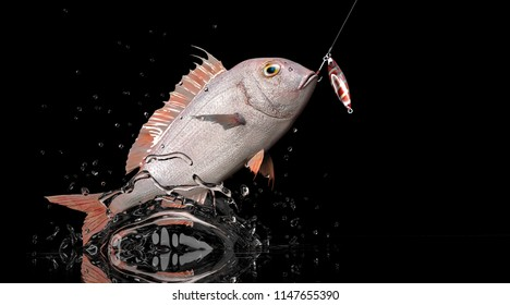 Red snapper fish catched with jigging. Jumped out of water black background 3d rendering