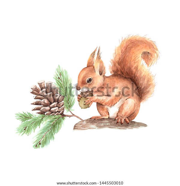 red squirrel on a tree with a branch and a cone. drawing watercolor