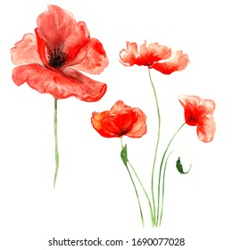 red summer poppies with stems painted in watercolor