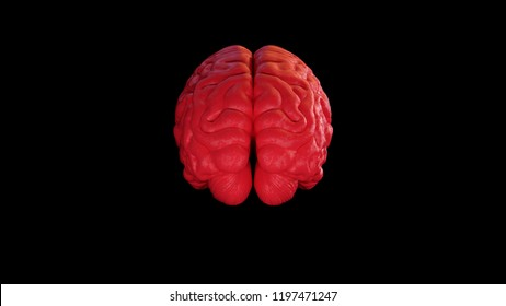 Red Textured Human brain Anatomical Model with Black Background Rear 3d illustration